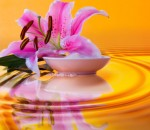 spa and body care
