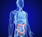 transverse colon of male body anatomy