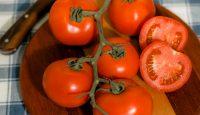 Tomatoes XXII